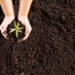 Práticas de melhoria da ecologia do solo