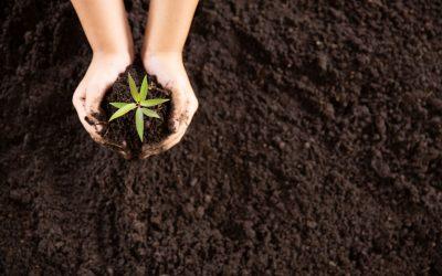 Best practises for improving soil ecology
