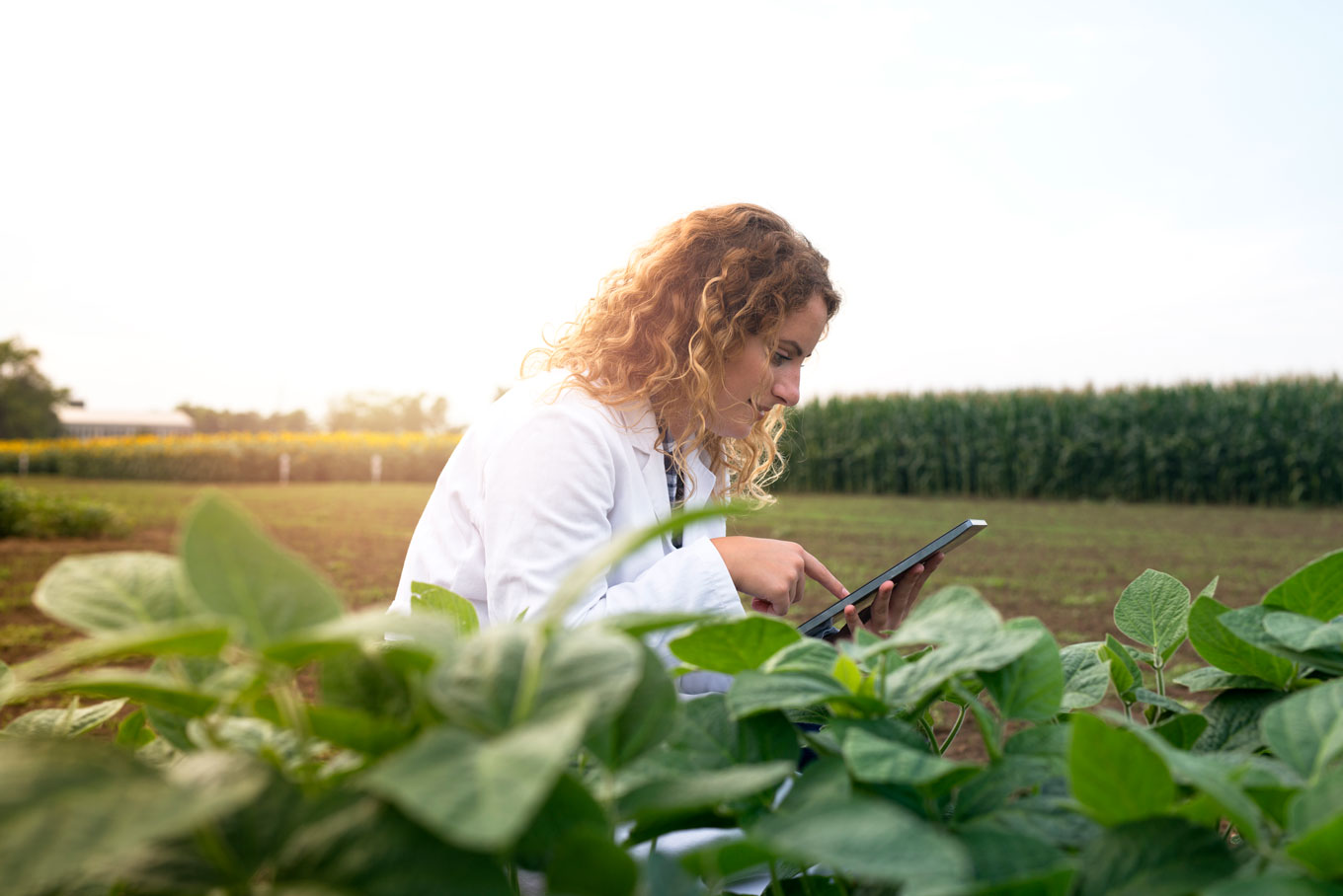 female-agronomist-checking-crops-in-the-field-with-tablet-computer