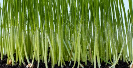 evergreens-and-dandelions-ZgY-zd7rH9g-unsplash
